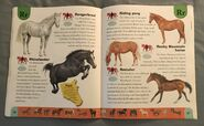 Horse Dictionary (20)