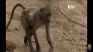 UTAUC Baboon