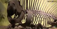 CMONH Dimetrodon