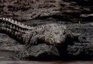 HugoSafari - Crocodile09