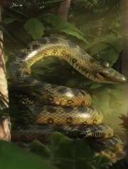 JungleBunch Anaconda.jpg