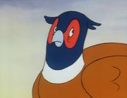 Mr. Pheasant 16