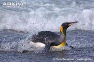 Penguin, King.jpg