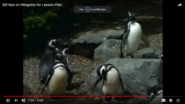 Penguins Don't Spend Much Time On Land