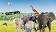Safari-bike-africa-animales-elephant, rhino, buffalo, lion, leopard