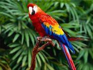 Scarlet Macaw (V2)