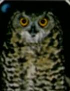 South Park Owl