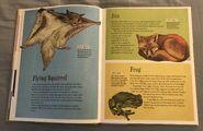 The Dictionary of Ordinary Extraordinary Animals (17)