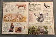 The Kingfisher First Animal Encyclopedia (52)