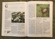 The Kingfisher Illustrated Encyclopedia of Animals (58)