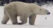 Zoboomafoo Polar Bear