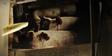 Zoo 2015 Pigs