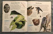 DK Encyclopedia Of Animals (156)