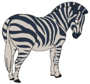 Gravy the Zebra