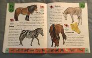 Horse Dictionary (26)