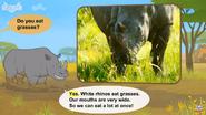 I'm A White Rhinoceros