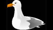 Safari Island Seagull