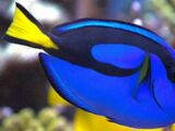 Finding Dory (Live-Action)