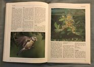 The Kingfisher Illustrated Encyclopedia of Animals (163)