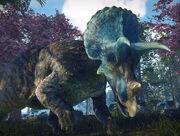 Triceratops 2.jpg