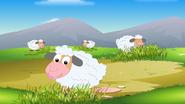 Appu Sheep