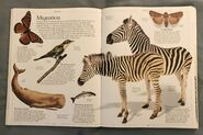 DK Encyclopedia Of Animals (31)