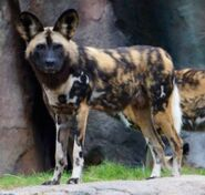 Disney's Animal Kingdom Dog (V2)