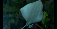 Tanked! Southern Stingray