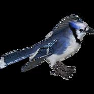 ZT2 Blue Jay (HENDRIX)