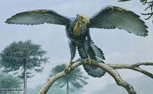 Archaeopteryx 12.jpg