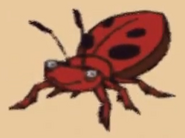 Insect wtpk