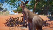 Planet Zoo Kangaroo