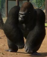 Planet Zoo Western Lowland Gorilla