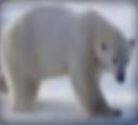 Polar-bear-disneythinkfast