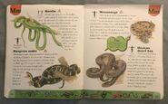 Snake Dictionary (13)
