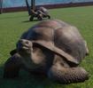 Tortoise, Galápagos (Planet Zoo)