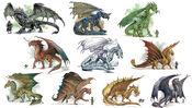 Chromatic and Metallic Dragons