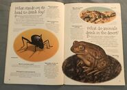 Desert Animals (Over 100 Questions and Answers to Things You Want to Know) (2)