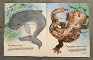 P is for Pangolin (6)