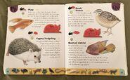 Pet Dictionary (19)