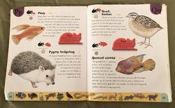Pet Dictionary (19).jpeg