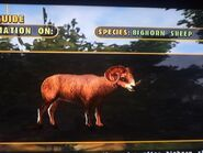 The bighorn sheep by darcygagnon d8dq1ox-fullview