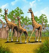 ZT-Giraffe