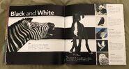 Animal Colors (Beth Fielding) (11)
