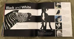Animal Colors (Beth Fielding) (11).jpeg
