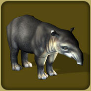 Bairds Tapir (Blue Fang)