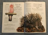 Desert Animals (Over 100 Questions and Answers to Things You Want to Know) (13)