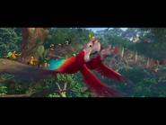 IMG macaw threatened
