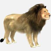 Model Lion