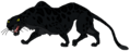 Panther rosemaryhills
